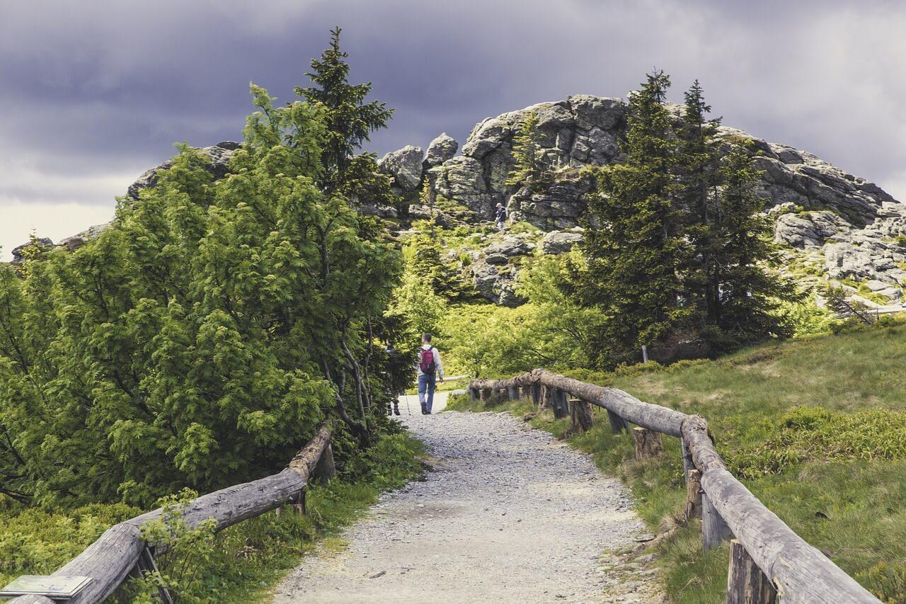 Bayerischer, Wald