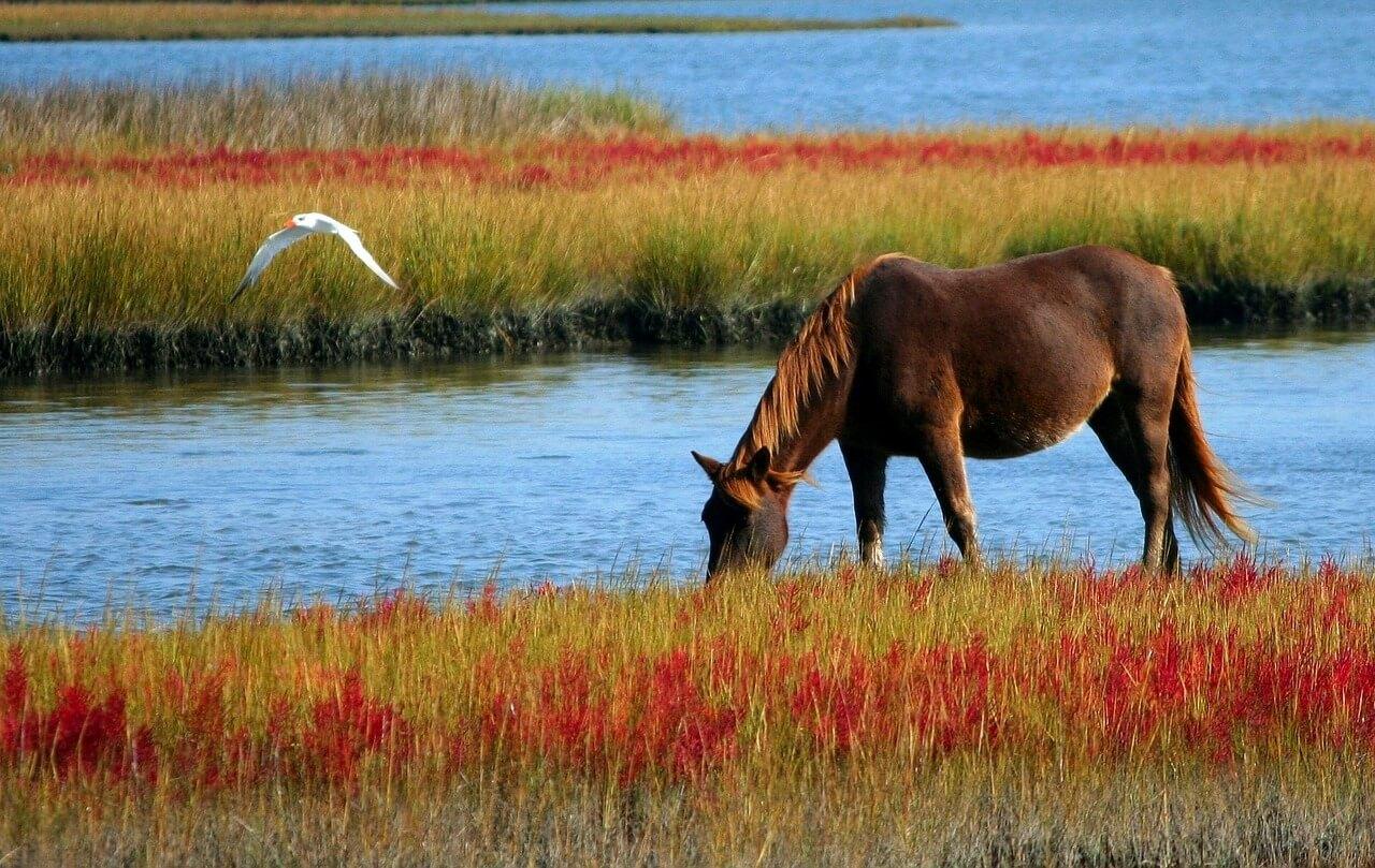 Die Top 10 Pferderanches weltweit