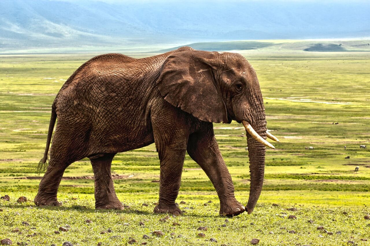 Auf den Spuren der Wildnis: Die Planung Ihrer Afrika-Safari