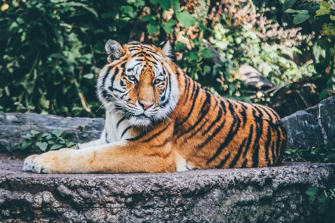 Die Top 10 Reiseziele für Tierfreunde