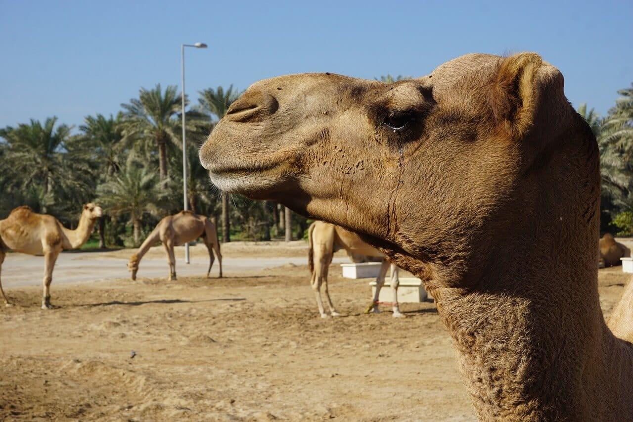 Die Top 10 Sehenswürdigkeiten in Bahrain