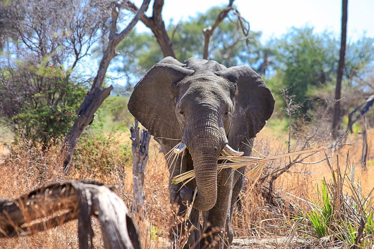Die Top 10 Sehenswürdigkeiten in Botswana