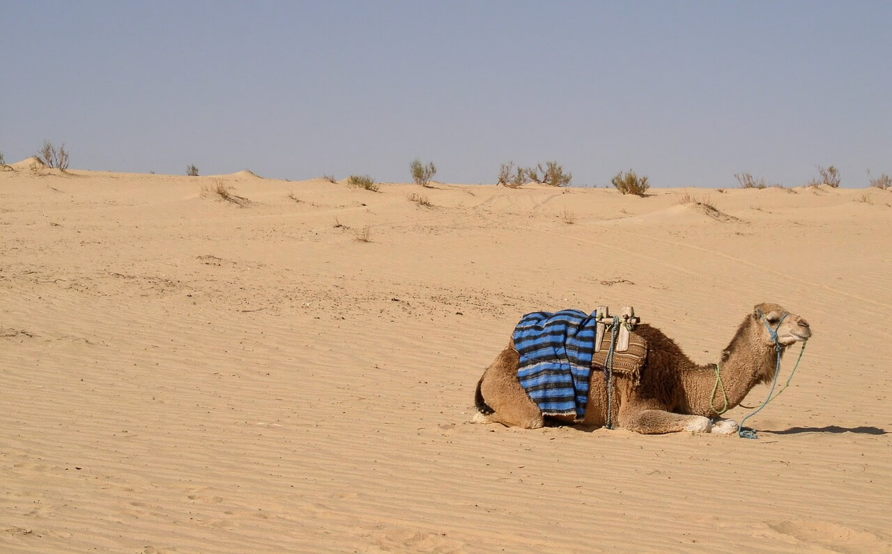 Die Top10-Sehenswürdigkeiten in Hammamet
