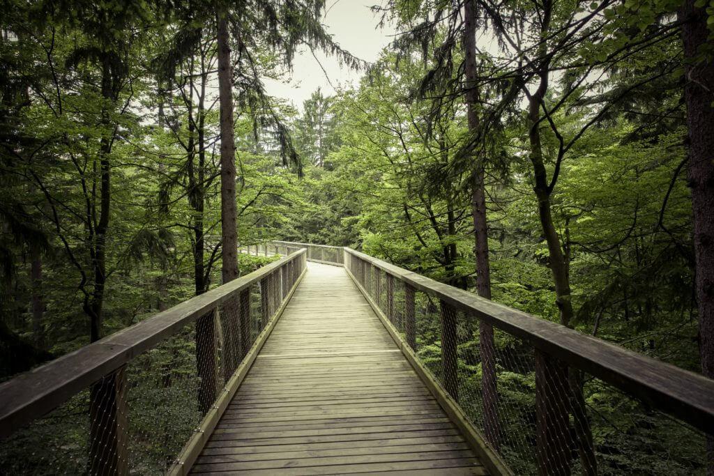 Die Top10-Sehenswürdigkeiten im Bayerischen Wald